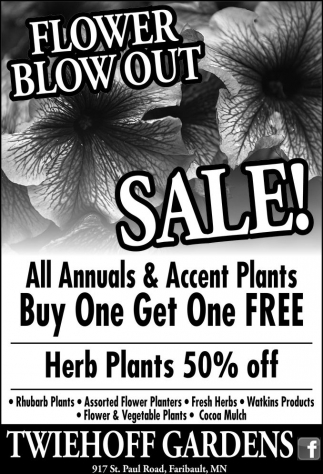 Herb Plants 50% off