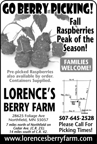 Fall Raspberries Peak of the Season!, Lorence's Berry Farm, Northfield, MN