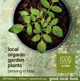 Local organic garden plants