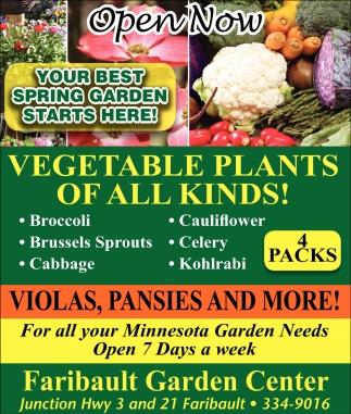 Vegetable Plants of all kinds!