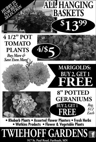Hanging Baskets, Tomato Plants, Marigolds, Geraniums