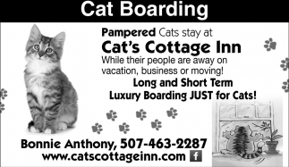 Luxury Boarding Just for Cats!